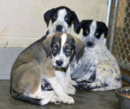 puppies tennessee death row dogs inc