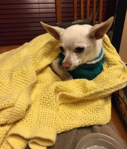 Dean relaxing in his foster home.